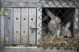 Почему кролики грызут деревянные клетки