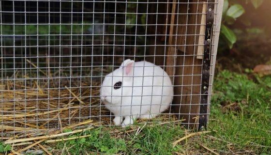 Клетки для кроликов по Золотухину